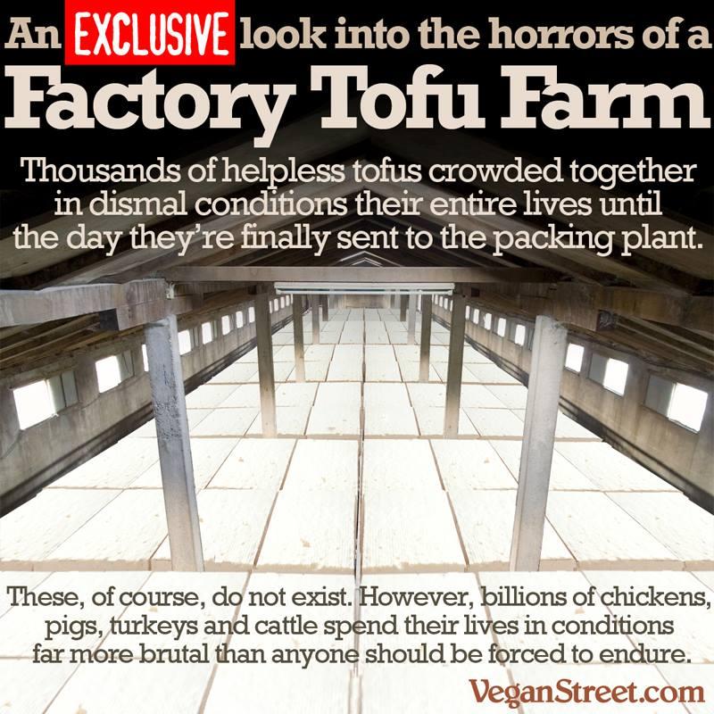 tofufactory