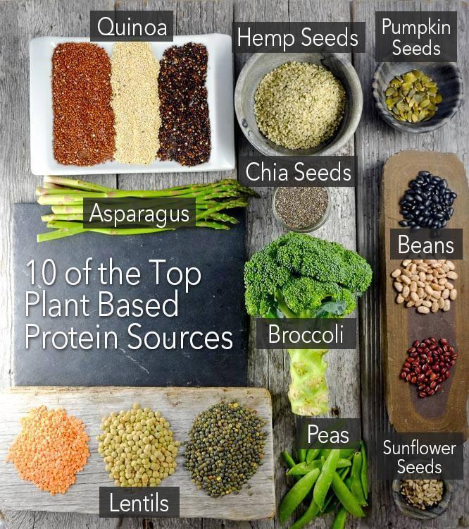 plant-protein